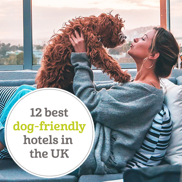 12 best dog friendly hotels in UK